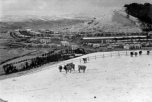 Cattle on Twin Peaks, 1932